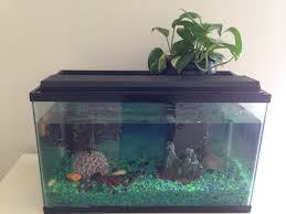 Aquaponics fish tank growing a plant in water - dwc