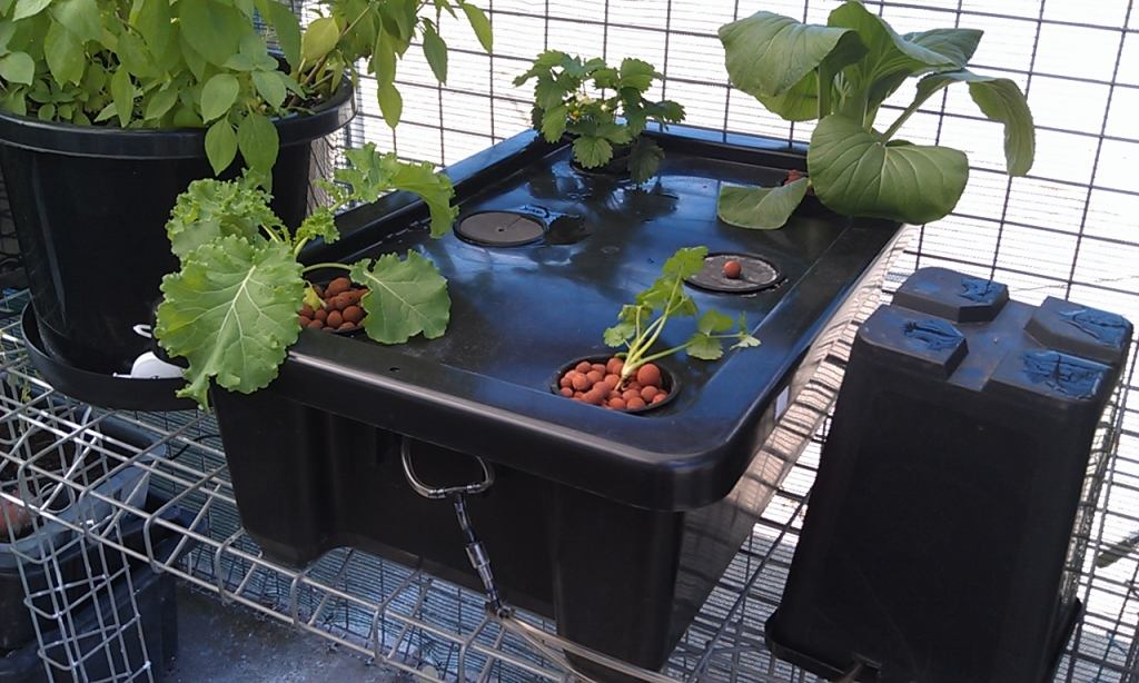 Bubbleponics hydroponic systems