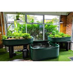 Family Aquaponics Kit